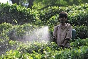pesticide ceaiurile indiene
