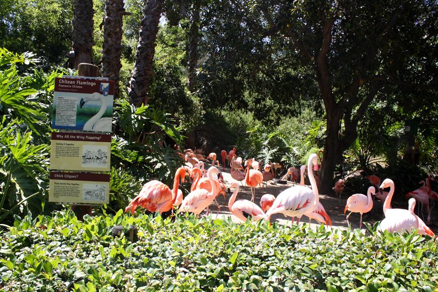 La Zoo And Botanical Gardens - Best Zoo Image 2018