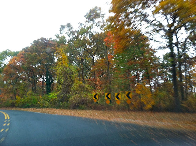 Blurry-Autumn-Color-in-Bethpage-State-Park
