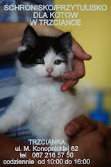 Adoptuj kotka Trzcianka Wielkopolska