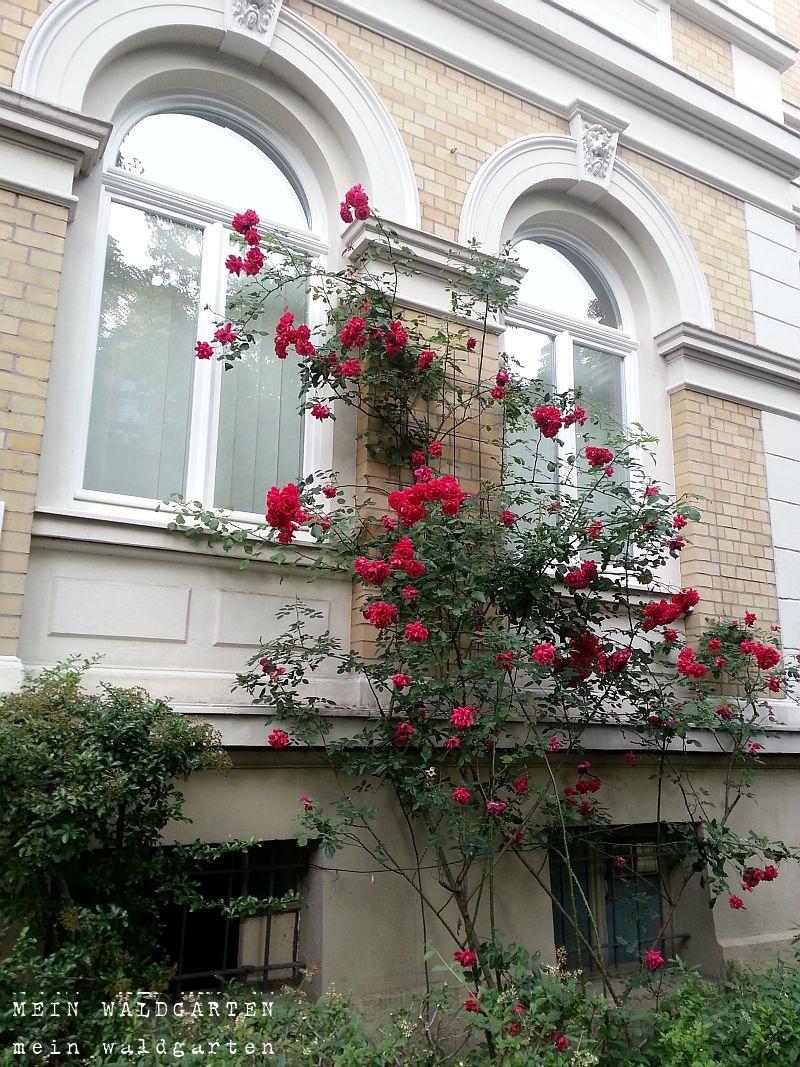 mein waldgarten wohnung mit balkon haus mit mini garten. Black Bedroom Furniture Sets. Home Design Ideas