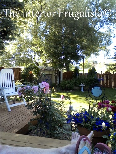 Summer back yard