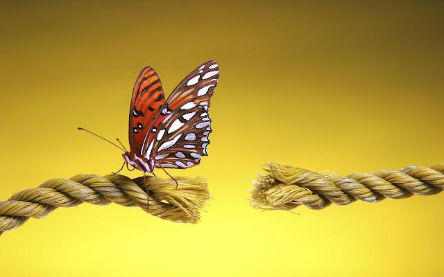 Best Jungle Life butterfly, free desktop wallpapers,