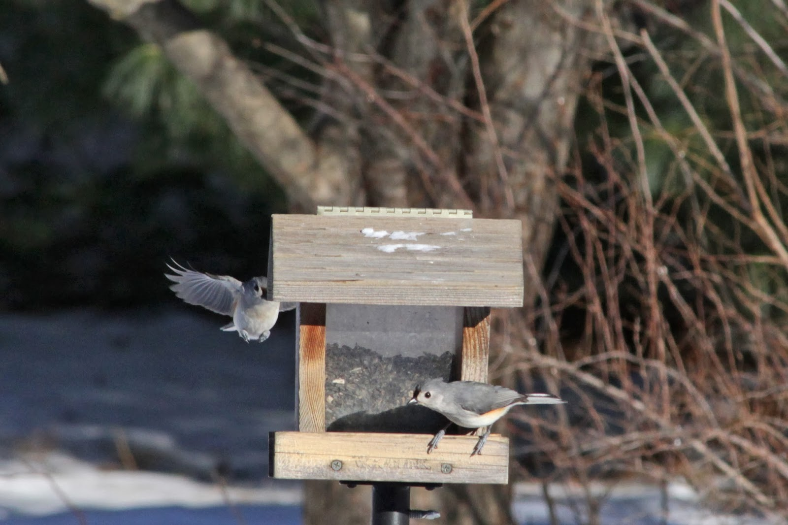 flying to feeder three