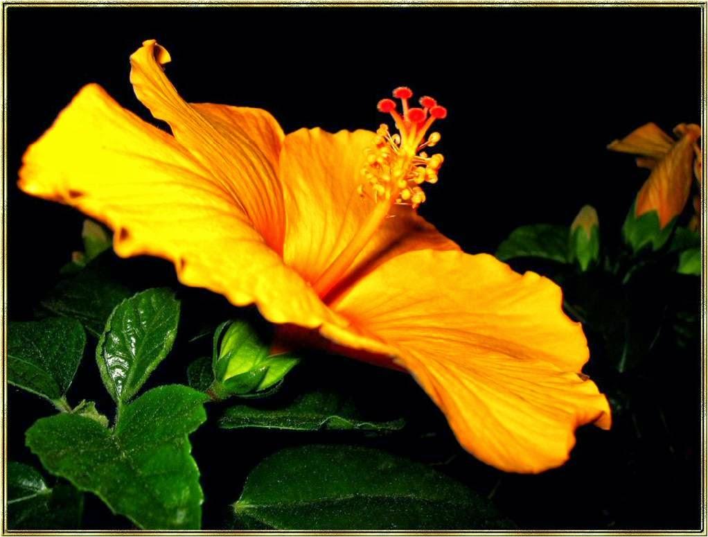http://www.chezjoeline.com/app/download/9993653995/Hibiscus+..+19+01+2015.pps?t=1421602317