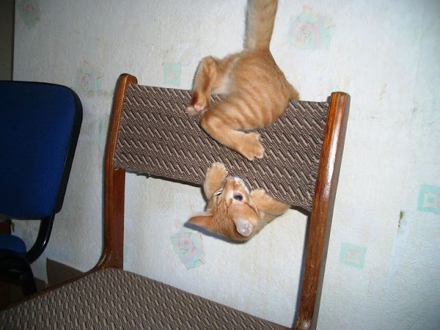 funny cats pictures, playful cat