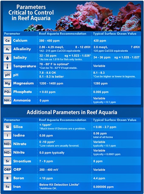Aquarium Test Kits Which Parameters You Should Test For