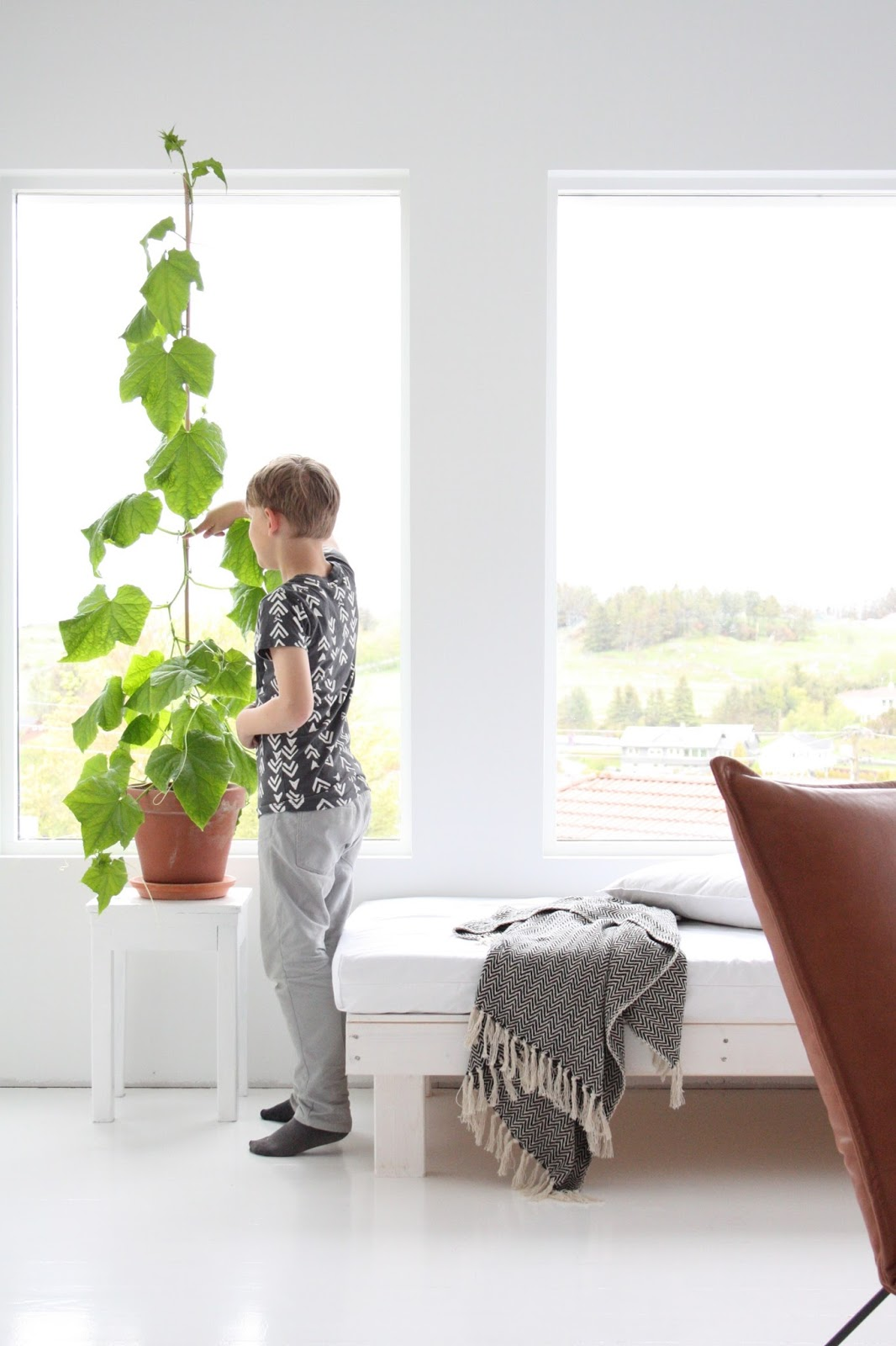 Agurkplante inne