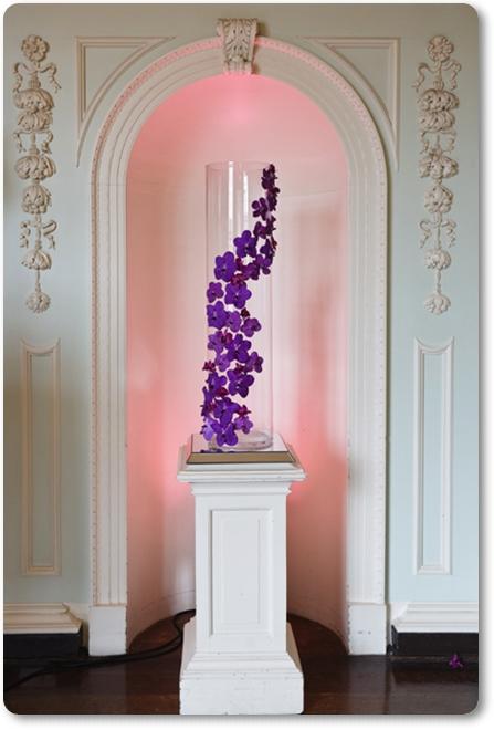 vanda orkidéer, vanda orchids