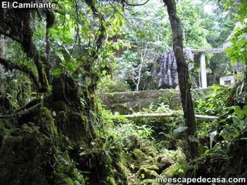 Naturaleza en el Centro Turístico Naciente del Río Tioyacu (Rioja, Perú) 4