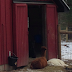 Building Unity Farm - Creating an Animal Community