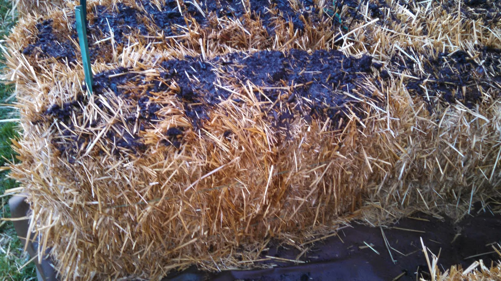Day 6, After Water, Side of Bale