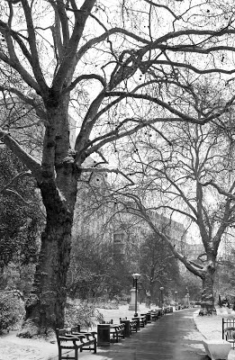 Snowy Victoria Embankment Gardens