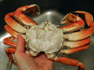 hand holding Whole cleaned crab over sink