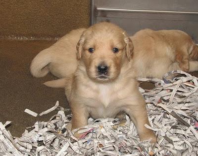 A Matisse puppy!