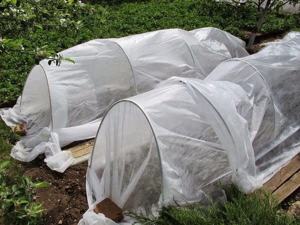 Защита растений от мороза в теплицах и парниках