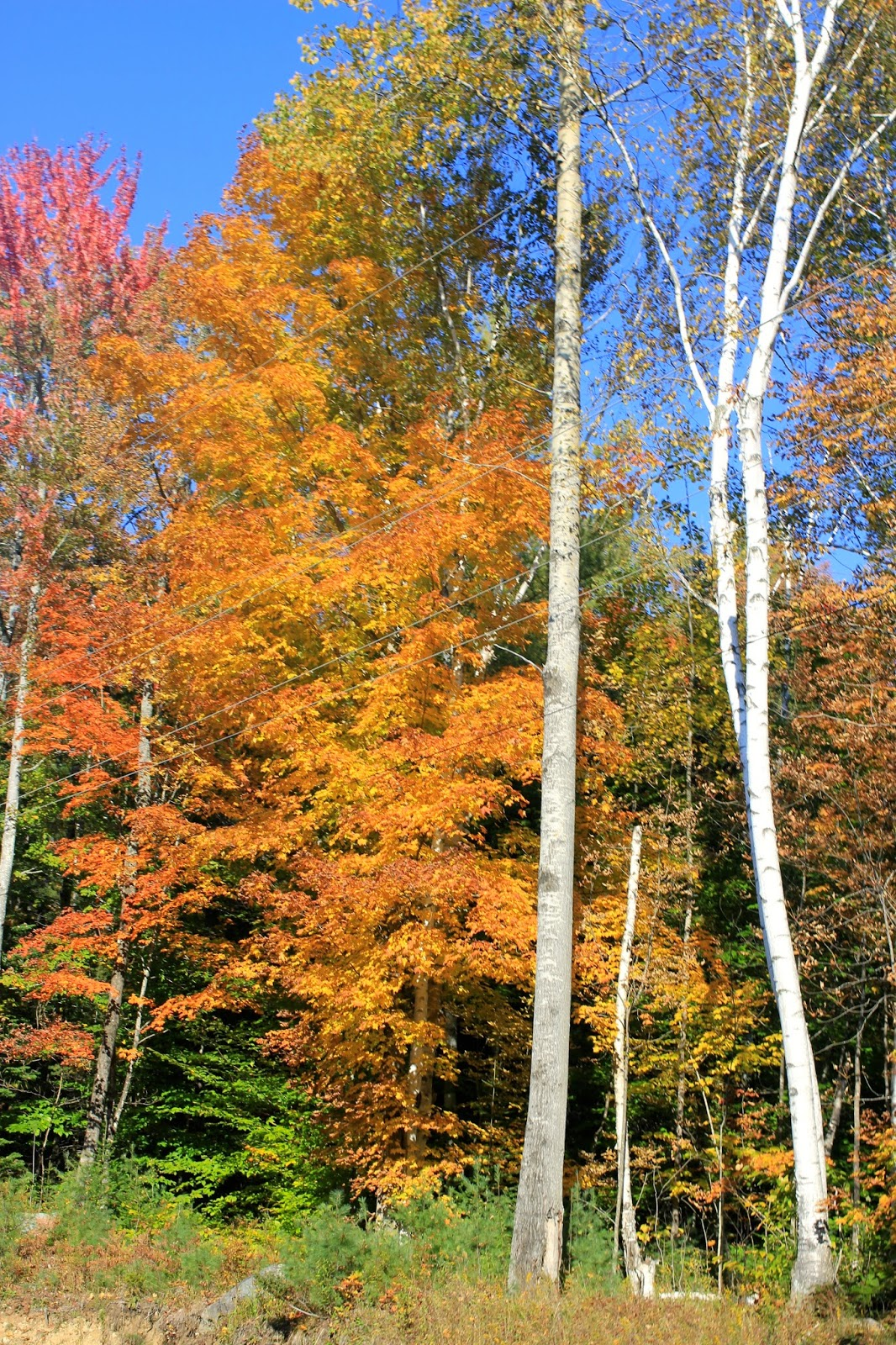 Fall Foliage in the Adirondack Mountains in Upstate, NY. Via www.goldenboysandme,com