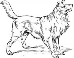 Free Dog Breed Colouring Pages