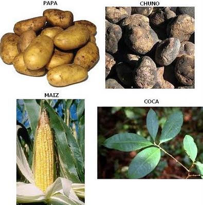 Economía Tiahuanaco (Papa, chuno, maíz, coca)