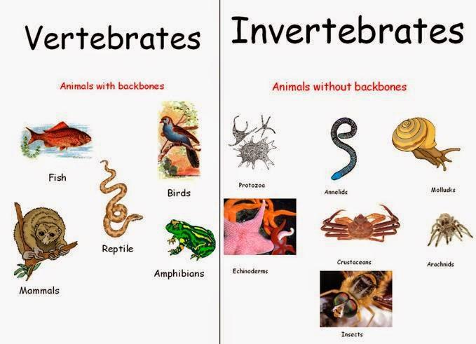 classification of vertebrates and invertebrates worksheet pdf