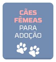 http://tombalatascuritiba.blogspot.com.br/search/label/F%C3%AAmeas%20para%20Ado%C3%A7%C3%A3o