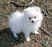 Sonhar com cachorro branco
