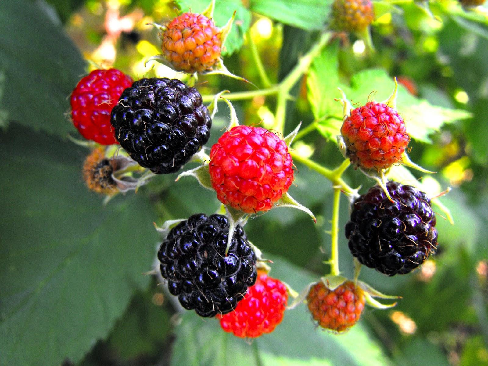 Διαδικασία για να βγάλετε τους  λεκέδες από κόκκινα φρούτα.