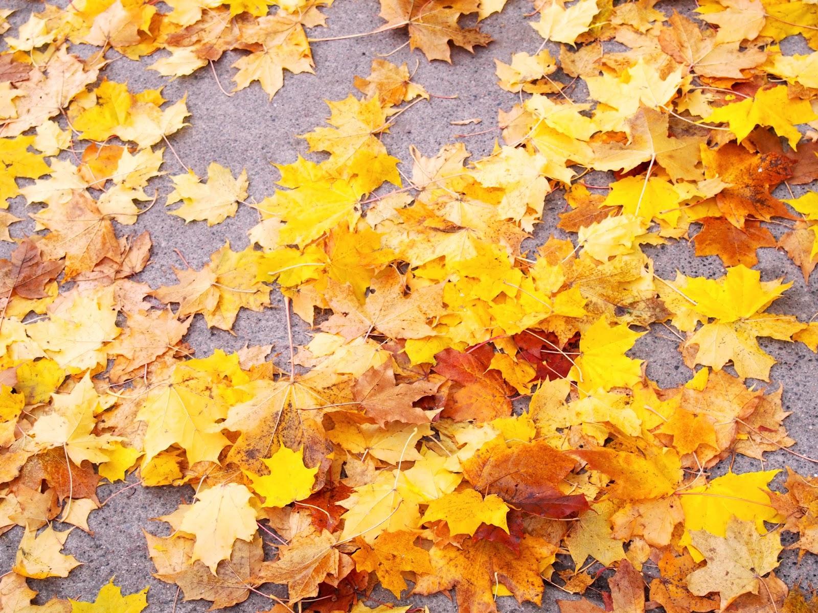 Fall, syksy, autumn, color, colour, ruska, lehti, leaf, leaves
