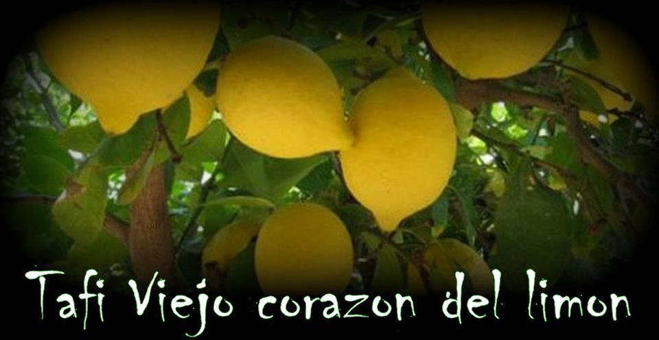 Tafi Viejo corazón del limon