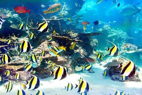 Churaumi Aquarium, Jepang
