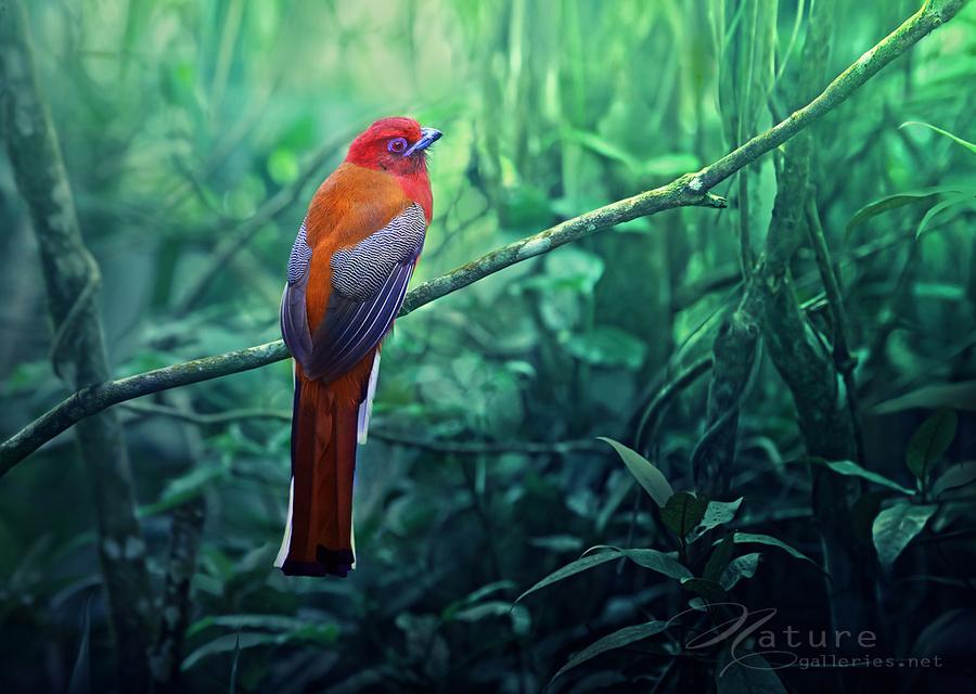 Необыкновенной красоты птицы