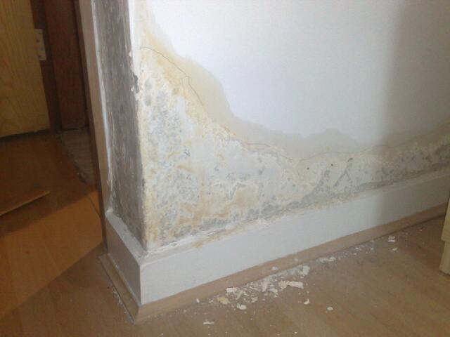 Eco Home Centre Blog Damp Internal Walls