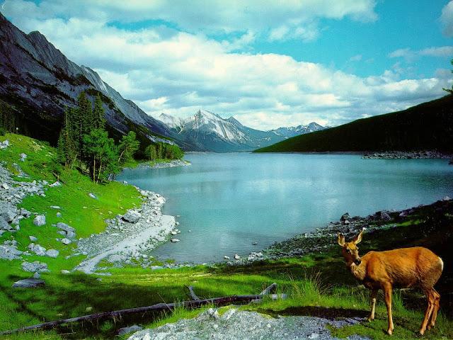 Background Nature2
