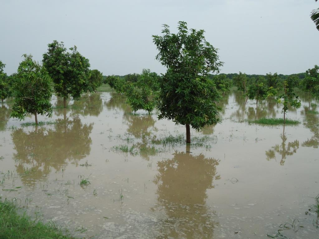 monsoon in pakistan With deaths mounting and cities flooding as late monsoon rains lash punjab and azad kashmir, experts are once again.