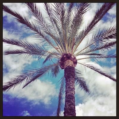Palm / Palmera Albir