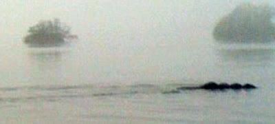 http://1.bp.blogspot.com/-MlWl68aob_g/TV17QFgUUDI/AAAAAAAAXk0/R3toYrGQQTs/s1600/bownessie3.jpg