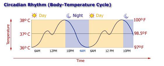 درجة حرارة الجسم أثناء اليوم , Circadian rhythm