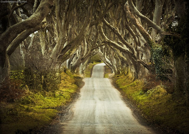 19. Dark Hedges by marek biegalski