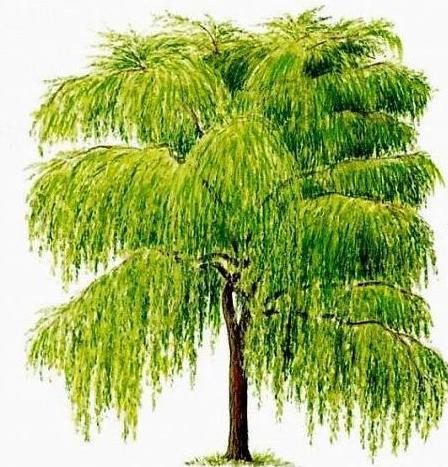 http://1.bp.blogspot.com/-MmGkXRzqVF4/T1k_E2EKZGI/AAAAAAAABV4/iXQbvAG34Q8/s1600/albero.JPG.jpg