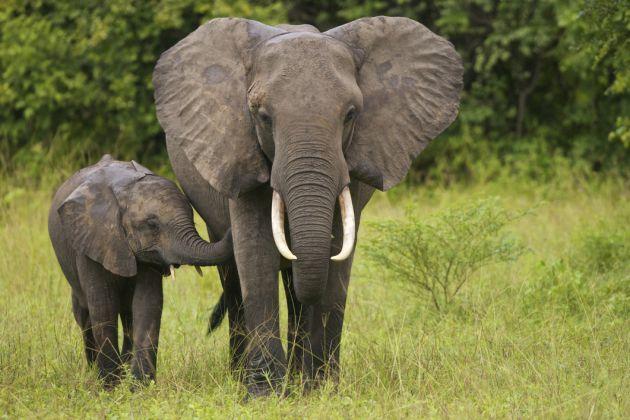 Imagenes de elefantes im genes de elefantes elefante - Fotos de elefantes bebes ...