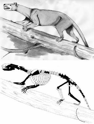 marsupiales prehistoricos Prothylacinus