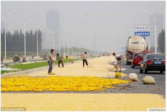 Apa Yang Dilakukan Petani Di China Ini Pasti Mengejutkan Anda