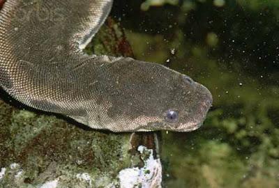 Những loài rắn kì lạ nhất thế giới