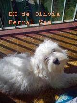 album bichonero 7 10