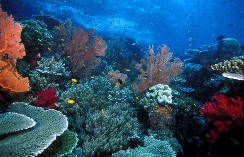 Raja Ampat Sea