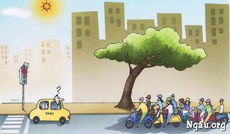 Biếm họa giao thông: dừng xem khi đèn đỏ