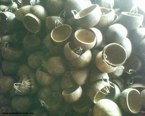Tempat-makan-kelinci-dari-batok-kelapa
