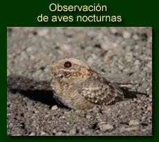 http://iberian-nature.blogspot.com.es/p/ruta-tematica-observacion-de-aves_6941.html