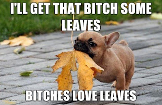 bitches loves leaves