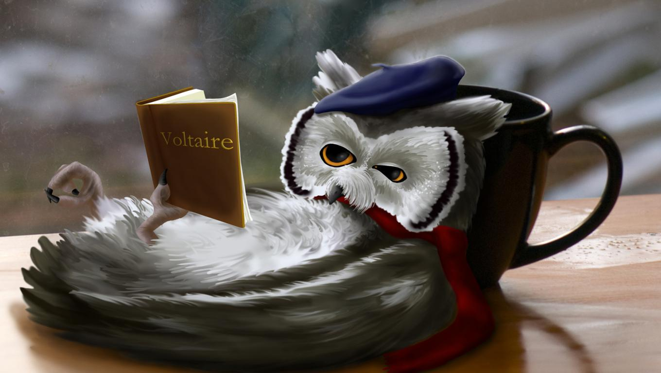 Wallpapers Jokes Funny Fantasy Reading Owl Hd Pictures